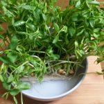 あったか豆苗レシピで秋の体に栄養補給!豆苗は安くて、簡単で栄養があるのです