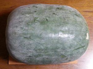 巨大、冬瓜