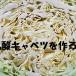 乳酸キャベツの簡単な作り方、井澤由美子さんあさイチレシピ