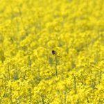 花粉症対策料理!?アカモクのレシピ、あさイチからの情報です。