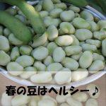 春の豆はヘルシー食材|ダイエットにも?簡単レシピ紹介
