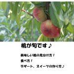 旬の桃の食べ方、美味しい桃の見分けかた、桃スイーツレシピなど「あさイチ」で公開