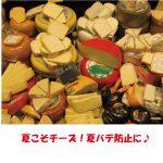 夏におすすめのチーズの食べ方やレシピで夏バテ防止!あさイチ「スマートライフ」